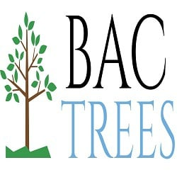 BAC Trees Offers Affordable Tree Care Solutions