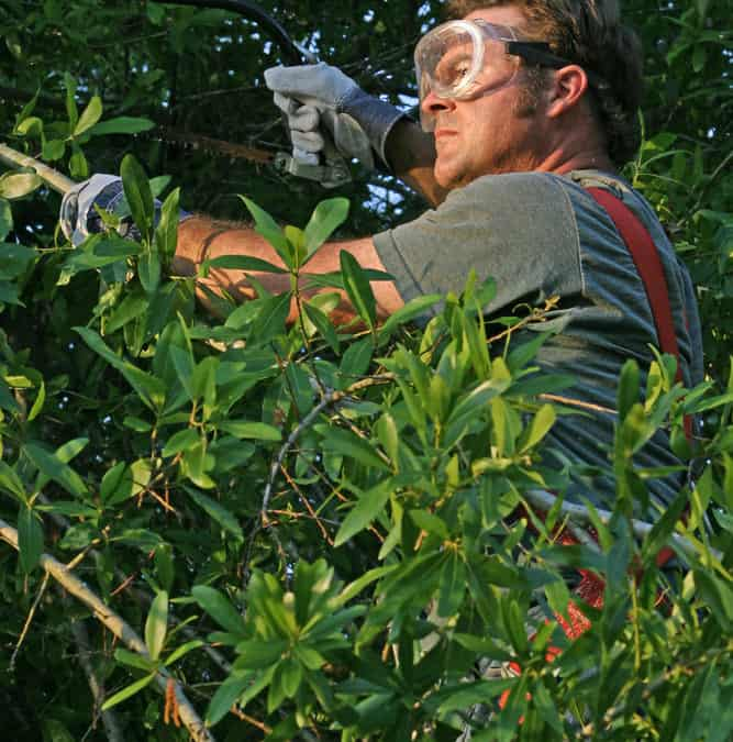 Safety Tips for Pruning